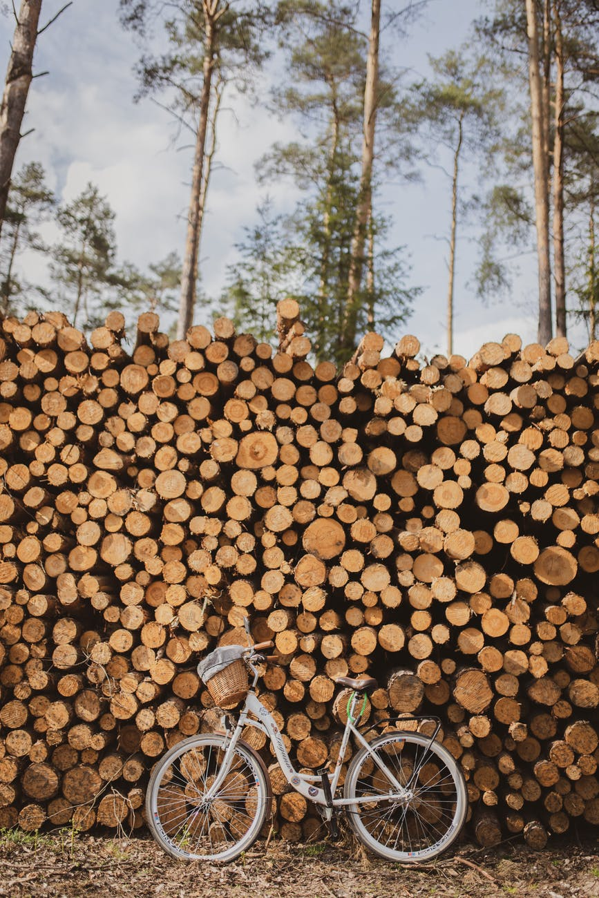 stack of firewood near bicycle and trees